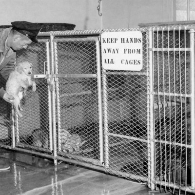 Animal_shelter_PAWS_04_30_1964.jpg