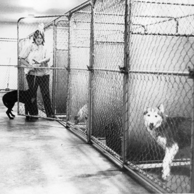 Animal_shelter_PAWS_10_14_1979.jpg