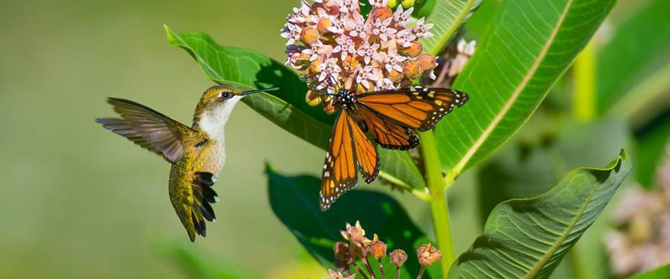 How-To Series ~ Gardening for Wildlife